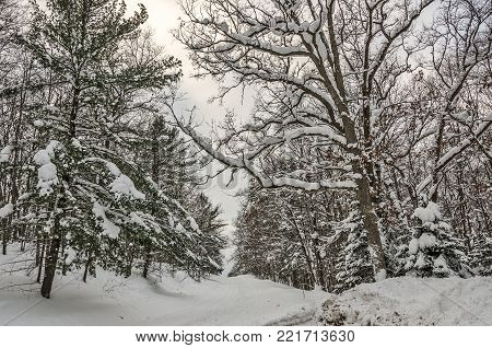 Snow-covered trees on a rural back road in Michigan