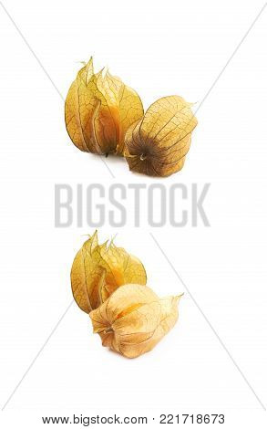 Two physalis fruits with the husk isolated over the white background