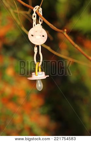 Dirty baby pacifier hanging outside in branch. Child  lost her dummy.