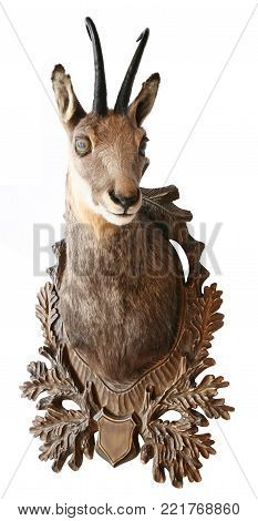chamois head trophy objects isolated animals theme
