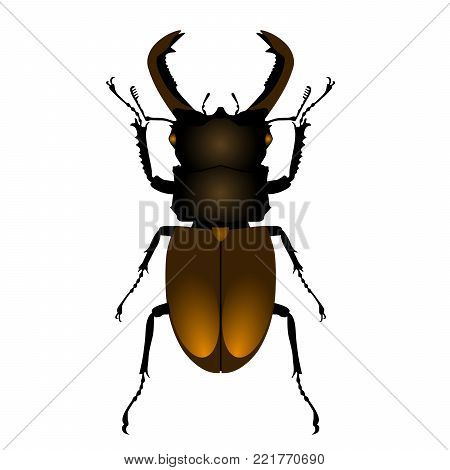 Common stag beetle top view, on white background