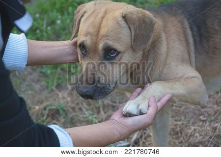 Poor homeless dog looking at someone with an outdoors in nature.