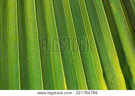 Large Stripes of Spiky Palm Tree Leaf in Golden Sun Flare. Vibrant Green Yellowish Color. Trendy Style. Tropical Vacation Traveling Asia Caribbean Copy Space. Backdrop for Text