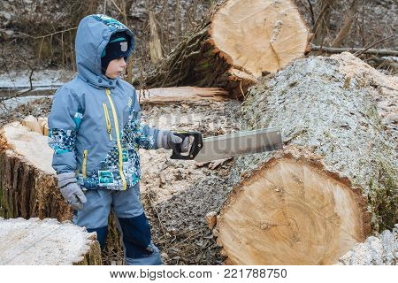 Minsk, Belarus - Jan 13, 2018: Young boy learns to saw. It's a big tree fallen and cut. It's huge and stable, so the child can cope it In contrast to a small wand that always wants to jump out.