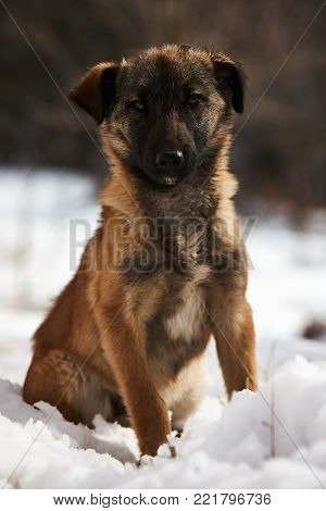 Winter cur dog portrait. Cute puppy dog sit on snow.