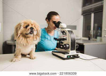 Female vet with dog and microscope. Female researcher with a microscope. Laboratory in the Veterinary Clinic.
