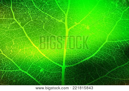 Leaf Structure Skeleton with Veins - Vector Grunge Background