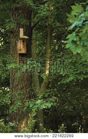 Wooden nest nestling timber box, starling bird house, large tree trunks and branches, birdhouse in sunny summer woods, lush foliage shadows, detailed vertical closeup