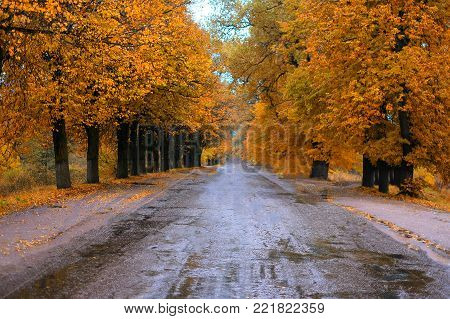Wet Road In A Beautiful Autumn Forest
