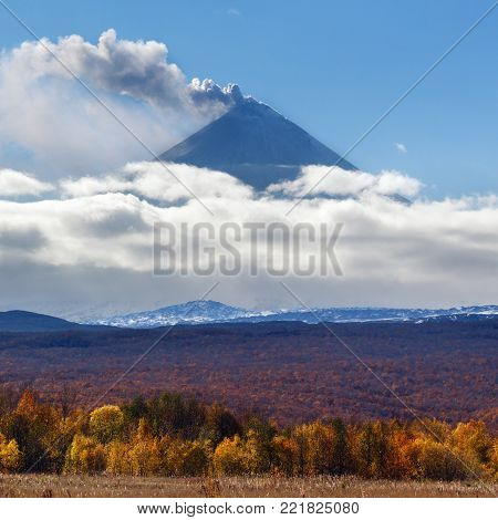 Beautiful autumn landscape: view of eruption of Klyuchevskaya Sopka (Klyuchevskoy Volcano) powerful plume of gas, steam, ash from crater and colorful autumnal forest at foot of active volcano on sunny day. Kamchatka Peninsula, Russian Far East.
