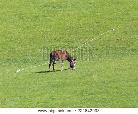 donkey grazing in a meadow . In the park in nature