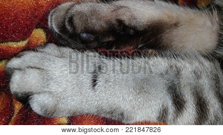 Tabby paws / Fluffy paws / Striped pet cat sleeps