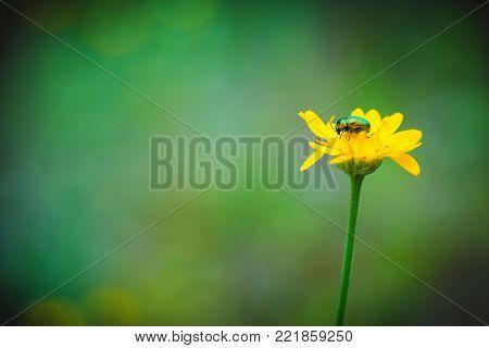 Dark Green Herbal Background