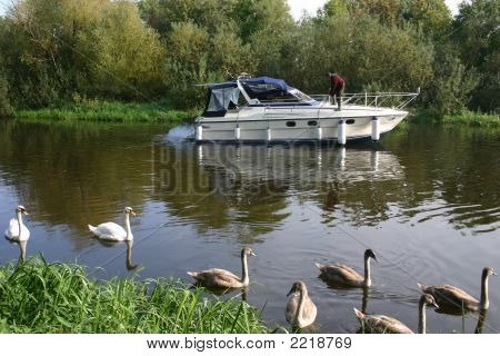 Speed Boat With Swans