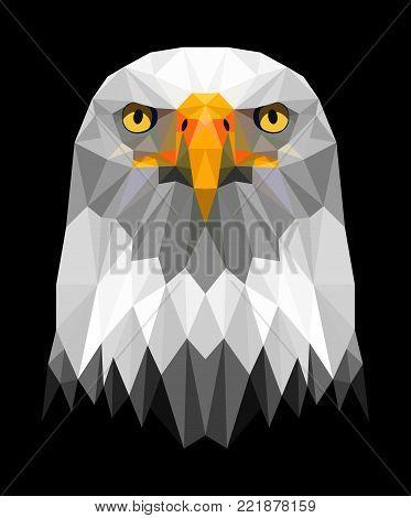 a beautiful sea eagle looking straight ahead