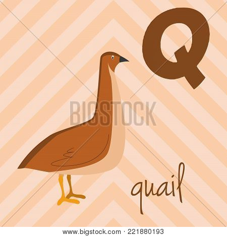 Cute cartoon zoo illustrated alphabet with funny animals: Q for Quail. English alphabet. Learn to read. Isolated Vector illustration.