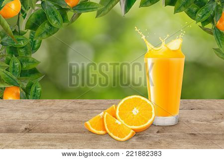 orange juice in glass and fresh orange fruit on table. Orange juice splash. Blurred green garden background. Ripe oranges hanging on a tree. Healthy drink concept. Copy space
