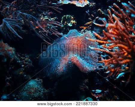 Soft coral and anemones swaying underwater. Close up macro photo. Beautiful sea biology.