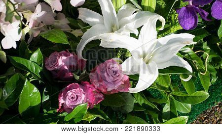 Close up of pink roses and white  lilly