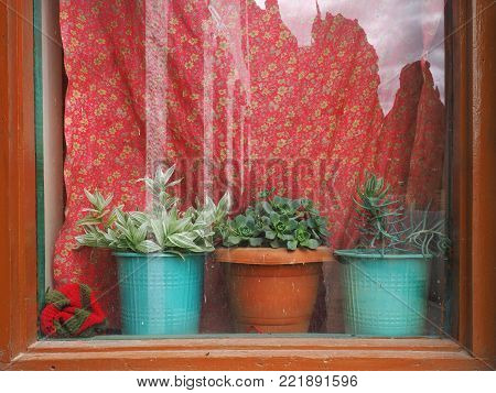 Window with bright red curtains: a brown vintage frame, but a window sill three houseplants in clay pots.