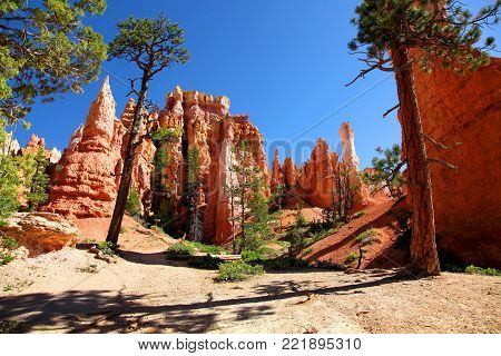 Red hoodoos and green pine trees of Bryce Canyon National Park