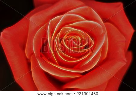 Red rose from top down, no stem visible