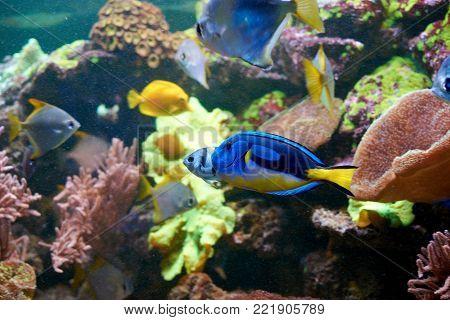 Exotic Tropical Underwater Predator Cerianthus