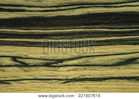 The texture is tree. Backdrop or background wooden. Eben Moon wood or ebony tree.