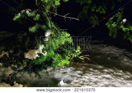 Image of spruce, lit by the bright light of the spotlight, late winter evening.