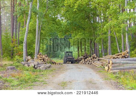 A big pile of log wood in a forest road. Forestry.