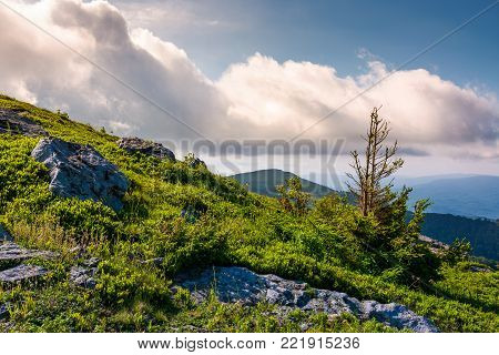 grassy slopes with rocks on a cloudy day. beautiful nature scenery in summer mountains