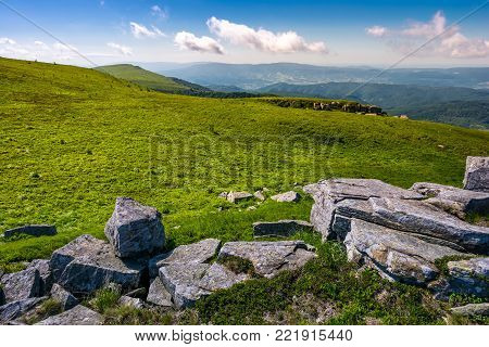 grassy alpine meadow of Polonina Runa. beautiful nature of Carpathian mountains in summertime