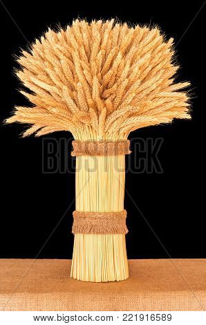 sheaf of ripe wheat standing on a table close-up on a dark background
