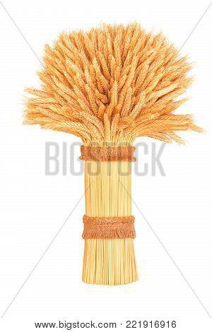 sheaf of ripe wheat, closeup on a white background