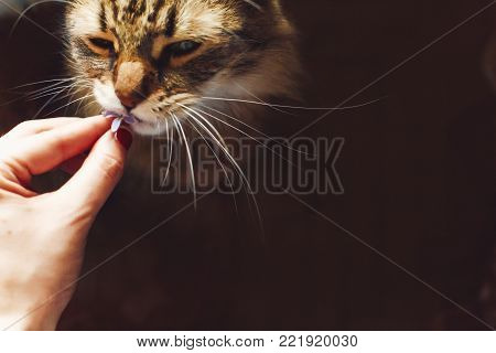 Hand Holding  Lilac Flowers And Cat Smelling It In Light In Rustic Rustic Room. Happy Earth Day. Hel