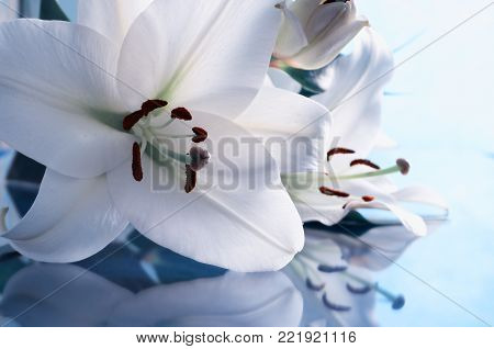 Spring background in cold tones. Spring lily flower, in Latin Lilium Navona. Colorful spring lily flower, flower spring background. White spring lily flower reflecting in the glass, spring flower composition. Flower background with spring flower of white
