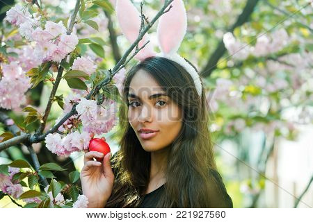 spring easter holiday, girl or pretty woman with rosy bunny ears and cute smile posing with colored red egg at tree with blossoming sakura flowers on sunny day on floral environment. Easter, holidays, celebration. Spring