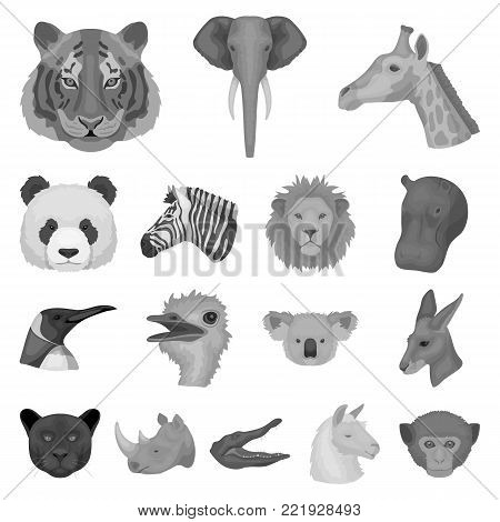 Wild animal monochrome icons in set collection for design. Mammal and bird vector symbol stock  illustration.