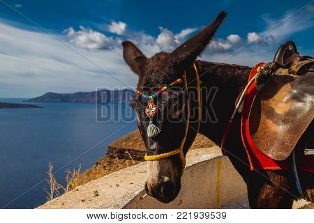 Santorini donkey posing on stairs on his way to Old Port, Thira