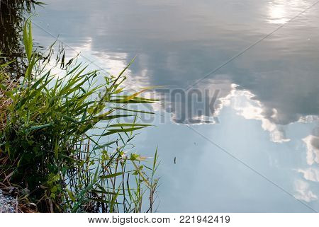 Green reeds grass hanging over the lake pond, the water reflects the blue sky and lush clouds, a summer sunny day