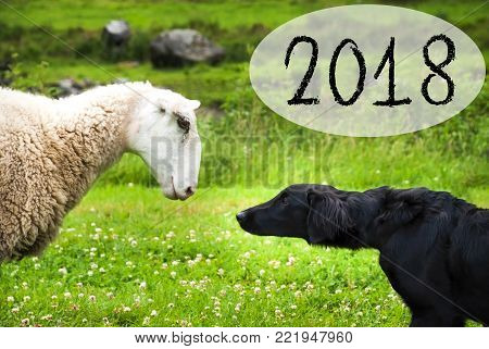 Dog Meets Sheep With Speech Balloon. Text 2018. Green Grass Meadow In Norway.