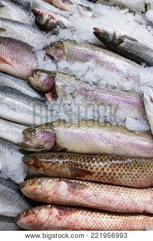 Variety of raw fresh fish. fillet on crushed ice. Close up with space. Fish market concept. Fresh catch of different fish on fish market