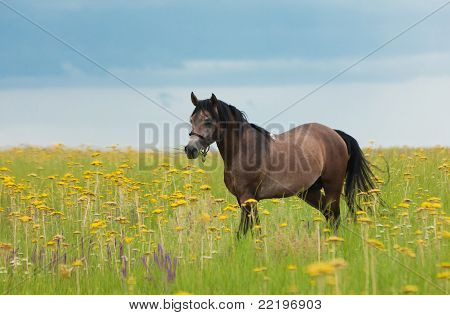Horse On A Green Lawn