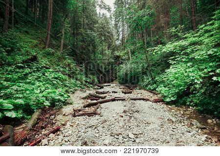 Coarse gravel trail covered with wooden logs between the hills in the Tatra Mountains in Slovakia. Pedestrian tourist trail. Outdoor extreme activity and leisure. Beauty of wild nature.