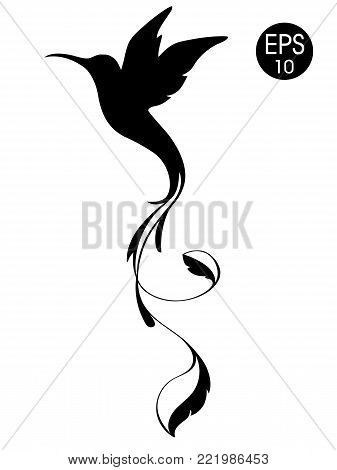 Colibri Bird silhouette. Black vector illustration of exotic flying hummingbird isolated on white background for your design