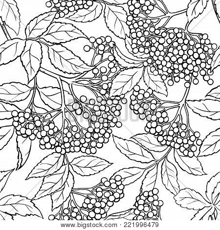 elderberry branches seamless pattern on white background