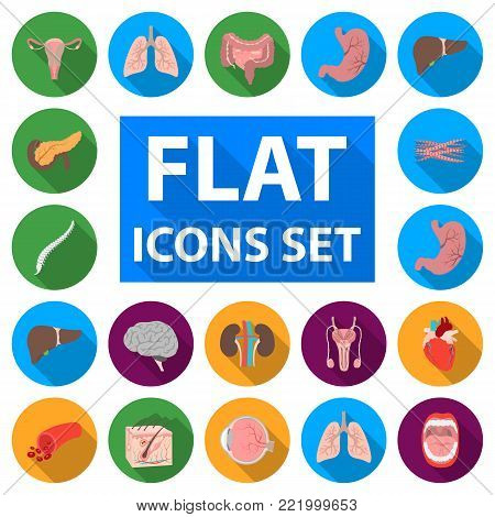Internal organs of a human flat icons in set collection for design. Anatomy and medicine vector symbol stock  illustration.