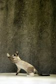 cute Cat lifts his paw on a grunge background. poster