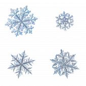 Four snowflakes isolated on white background. Macro photo of real snow crystals: complex stellar dendrites with elegant shapes, perfect hexagonal symmetry, long ornate arms and glossy relief surface. poster