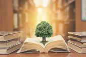 World philosophy day concept with tree of knowledge planting on opening old big book in library full with textbook, stack piles of text archive and blur aisle of bookshelves in school study class room poster